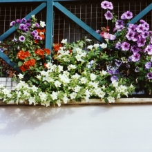 23 - Our flowers (2)